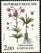 Lilium montanum, martagón
